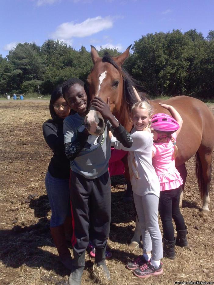 Kid's Summer Horse Clinic!